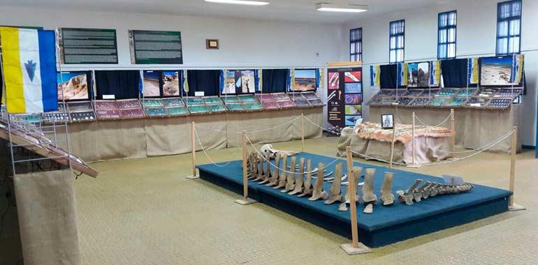 Exhibición de la muestra Mixa - Knoop y restos fósiles de una ballena picuda