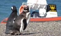 """""""Puerto Deseado aguarda la llegada de los pingüinos"""""""
