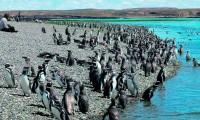 La Isla de los Pingüinos de Puerto Deseado: un lugar con mucha historia