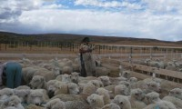 El campo patagónico entre el riesgo de extinción y de integración estratégica