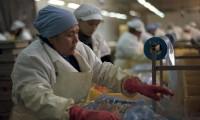 Santa Cruz por ley endurece la contratación de mano de obra para que se cumpla el 70/30