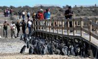 Punta Tombo será alimentada sólo con energía solar la próxima temporada
