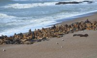 Especial Mamíferos: ¿a quiénes protegemos cuando hablamos de cuidar nuestros océanos?
