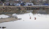 Turismo realizó un circuito guiado de observación de aves en Caleta Olivia
